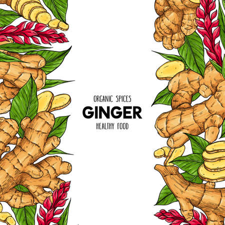 Vector hand drawn frame with organic ginger root, slices pieces, leaves and flower. Natural spices illustration Çizim