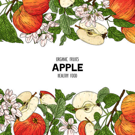 Vector hand drawn frame with whole apple, half, flower, branch and leaves. Organic fruits healthy illustration