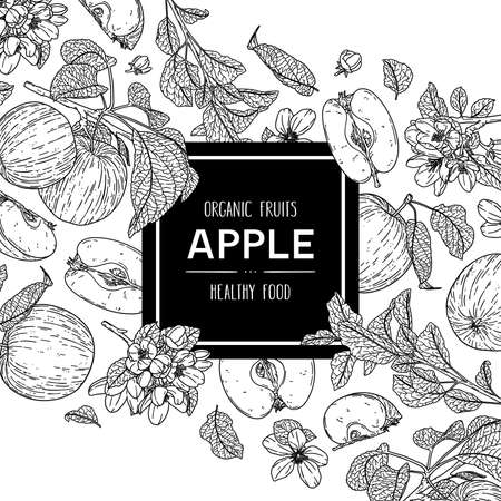 Vector hand drawn background with organic whole apple, half, flower, branch and leaves. Outline ink style illustration. 向量圖像