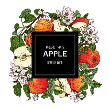 Vector hand drawn background with organic whole apple, half, flower, branch and leaves. Organic fruits healthy illustration