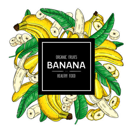 Vector hand drawn background with organic banana, slices pieces, bunch and leaves. Tropical fruits healthy illustration. 向量圖像