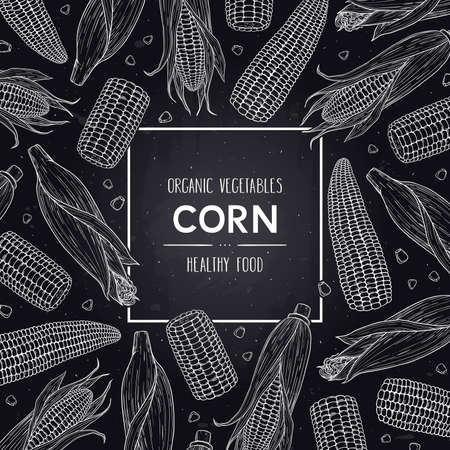 Vector hand drawn doodle frame with organic corn cobs and grain. Healthy sketch cereal illustration in chalkboard style.