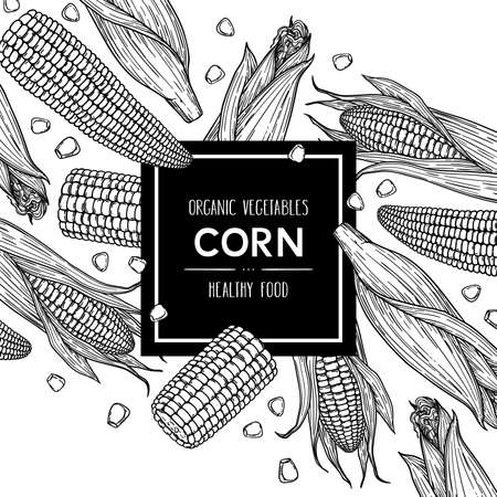 Vector hand drawn background with corn cobs and grain. Outline ink style illustration.