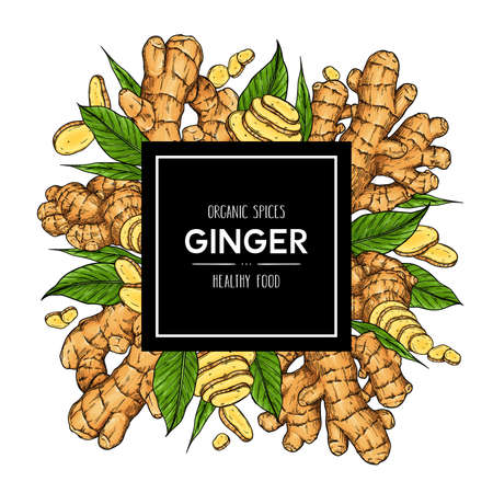 Vector hand drawn background with ginger: root, slices pieces and leaves. Healthy spices illustration.