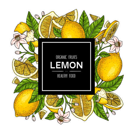Vector hand drawn background with organic whole lemon, slices pieces, half, flower and leaves. Citrus fruits healthy illustration 向量圖像
