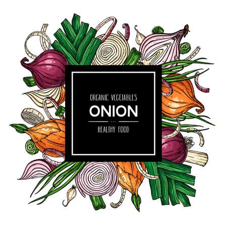 Vector hand drawn background with natural onion bulb, slices, halves, pieces, green onion and leek. Healthy vegetables illustration