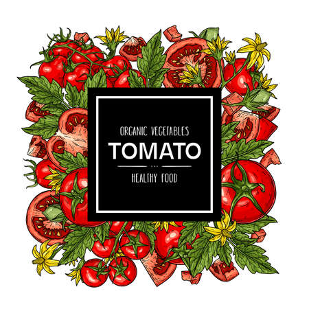 Vector hand drawn background with natural tomatoes, slices, half, flower, branch with leaves and cherry tomatoes. Healthy vegetables illustration