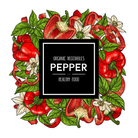 Vector hand drawn background with natural bell peppers, slices, halves, pieces, flower, branch and leaves. Healthy vegetables illustration