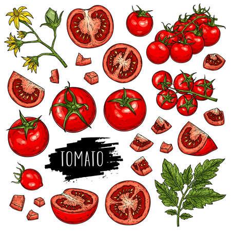 Hand drawn organic vegetable set of tomatoes, slices, half, flower, branch with leaves and cherry tomatoes isolated on white background with label. 向量圖像