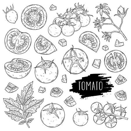 Organic vegetable tomato set. Hand drawn whole tomatoes, slices, half, flower, branch with leaves and cherry tomatoes isolated on white background with label. Outline ink style sketch. Vector coloring illustration.