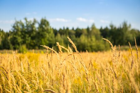 Malerische Landschaft in einem Feld auf dem Land an einem klaren sonnigen Tag im Spätsommer Standard-Bild