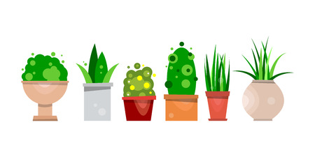 Set of pot plants for interior decoration. Vector illustration isolated on white background.