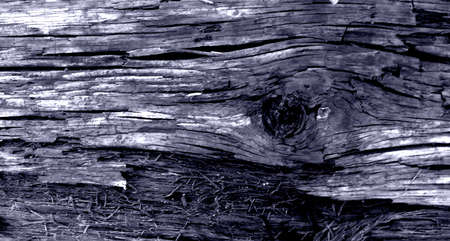 Close up of weathered wood unusual lilac color texture of an old Board Banque d'images