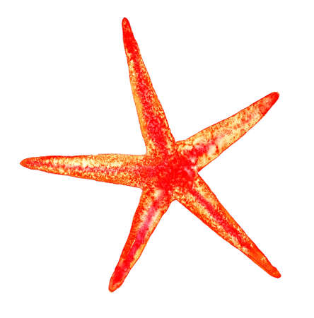 watercolor realistic drawing of a starfish in red orange bright colors isolated on a white background for a design with splashes of paint and spots