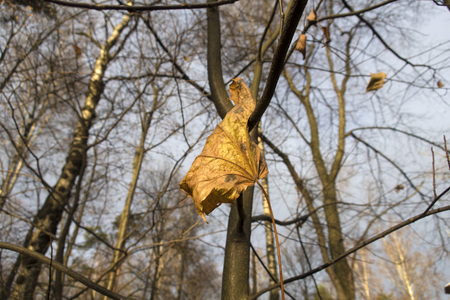 autumn yellow leaf on a tree branch