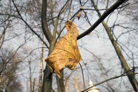 an autumn yellow leaf on a tree branch Stock Photo