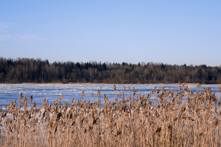 Amazing beautiful winter nature dry grass, and river and forest in the background
