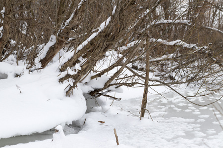 Beautiful winter nature, winter, snow, trees, winter forest.