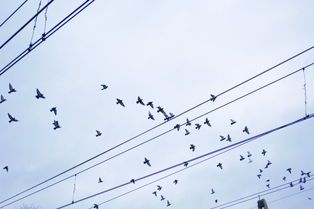 Birds are flying near the wires against the blue sky 版權商用圖片
