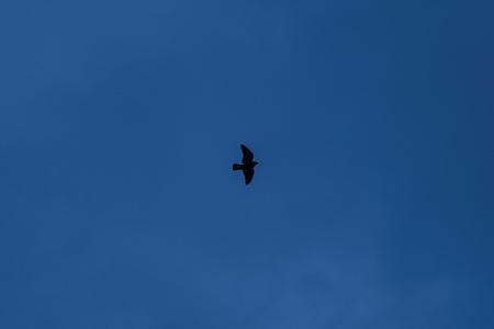 Silhouette of a bird in the night dark sky