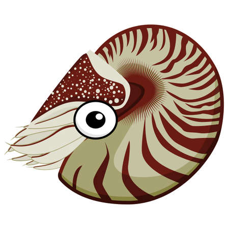 Cute cartoon sea mollusk Nautilus with eyes and red and yellow shell vector clipart