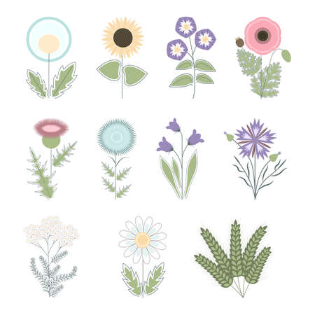 thistle, dandelion, blowball, chamomile, yarrow, poppy, bellflower, sunflower, cereals, agrimony, bindweed, vector collection of flat cartoon field flowers and herbs. Simple isolated illustration. Illustration