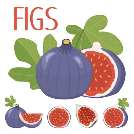 Drawn fruit of purple figs, fig pieces and slices in different angles, leaves of fig, vector isolated collection on white background.