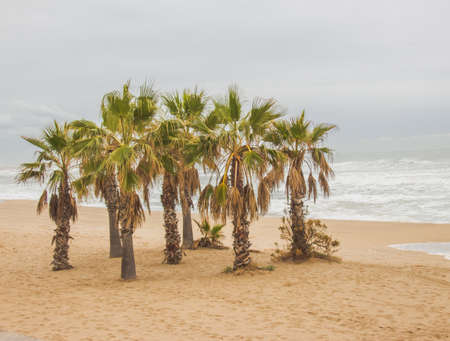 sunny day: Barcelona, ??Palmeras, relajante, mar, paisaje de mar, d�a soleado, �rbol Foto de archivo