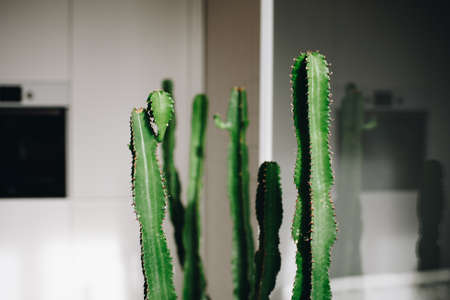 Clever use of green cacti plant in interior design of a living room as decoration