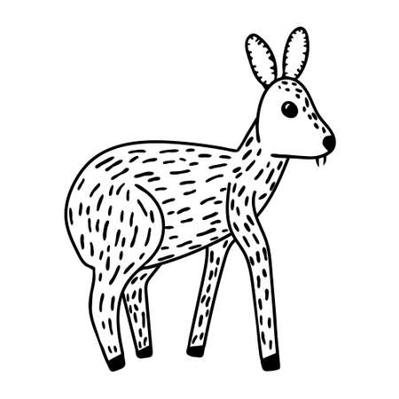 Musk deer with fangs doodle drawing. Black color line art isolated on white background. Cute animal with tusk-like teeth. Print design. Stock vector illustration. Foto de archivo - 149941179
