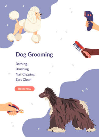 Dog grooming card template vector illustration. Flat poodle and afghan hound with groomers hands around. For landing page, pet care salon, shops, invitation, flyer, banner, poster, social network Stock Illustratie