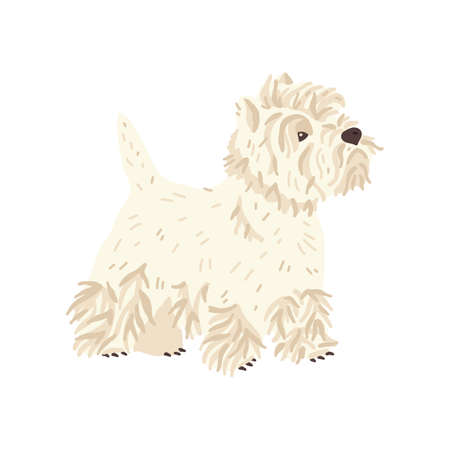 West highland white terrier vector illustration. Cute flat dog breed. Pet care and grooming fans concept. Fun animal for social networks, stickers, exhibition promo poster, banner, online guide