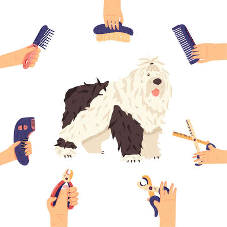 Bobtail and groomers hands with grooming tools around. Fun long fur dog breed flat vector illustration. For pet care salon, shops, landing, banners, promo poster, sticker, social network