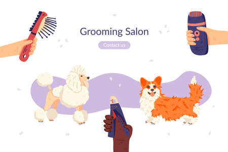 Grooming salon landing page template. Flat Corgi and Poodle dog breeds. Groomers hands with tools around. Vector illustration. For pet care social network, animal guide, banner, flyer