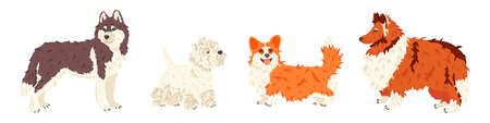 Husky, West Highland White Terrier, Corgi, Collie dog breeds vector flat set. For pet shops and grooming salon landing page, exhibition promo poster, social networks stickers, online guide