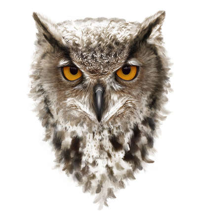 angry owl with ears and yellow eyes, feathers Foto de archivo