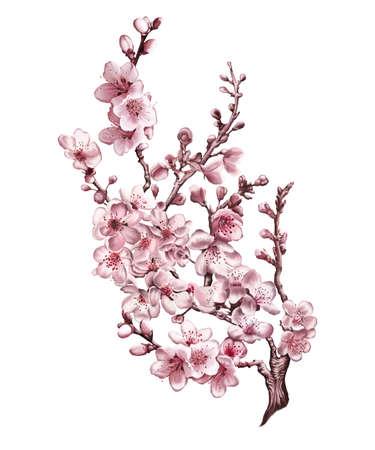 Sakura on a white background