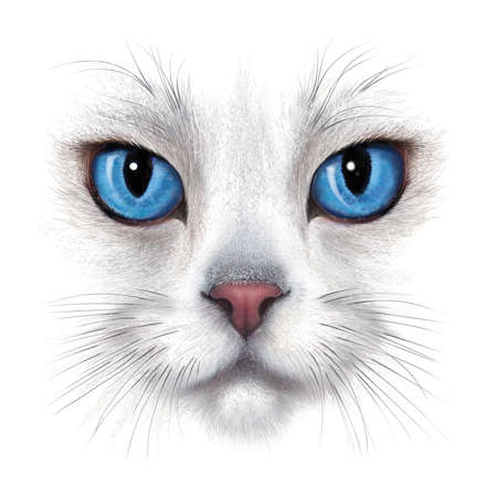 hand-drawing portrait of white cat with blue eyes isolated on white background Stok Fotoğraf