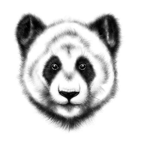 hand-drawing portrait of  a Panda isolated on white background