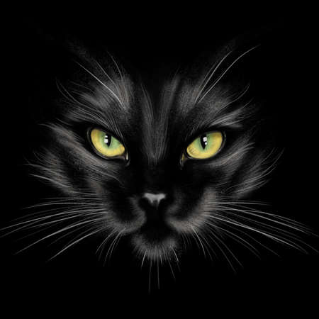 hand-drawing portrait of a black cat on a black background