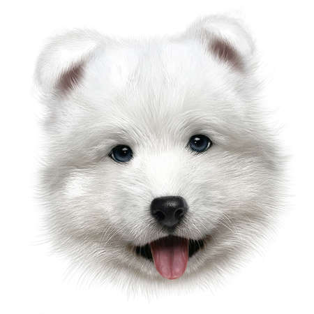 hand-drawing portrait of a puppy Samoyed on white background
