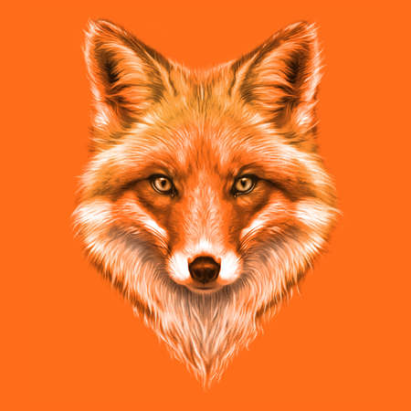 hand-drawing portrait of a a red Fox on a orange background