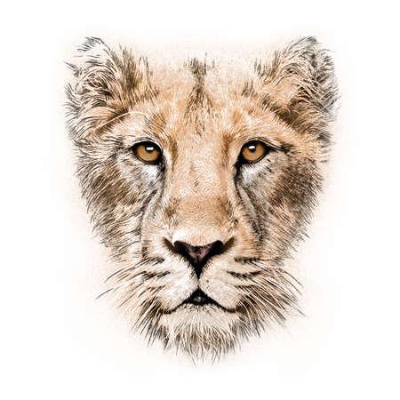hand-tekening portret van een leeuwin op een witte achtergrond