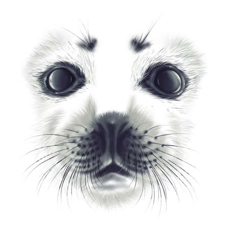 hand-drawing portrait of a a baby seal Belek on white background