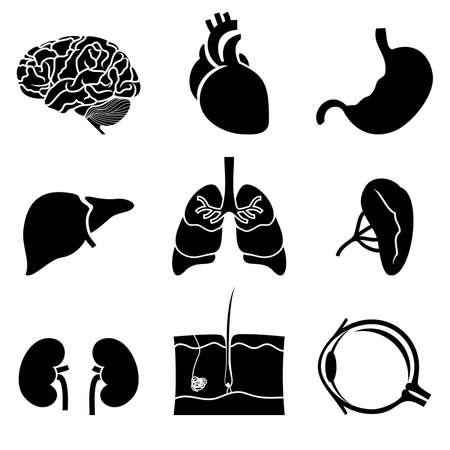 corazon humano: iconos anat�micos Vectores