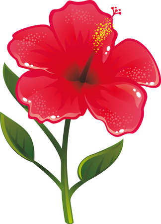 beautiful red hibiscus flower: Shiny flower Illustration
