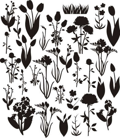 silhouette fleur: Silhouettes de fleurs Illustration