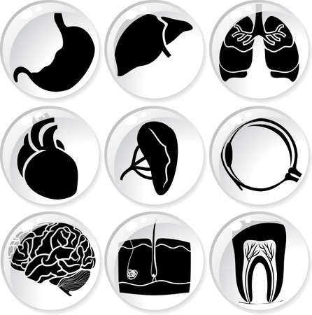 spleen: water drops anatomical icons  Illustration