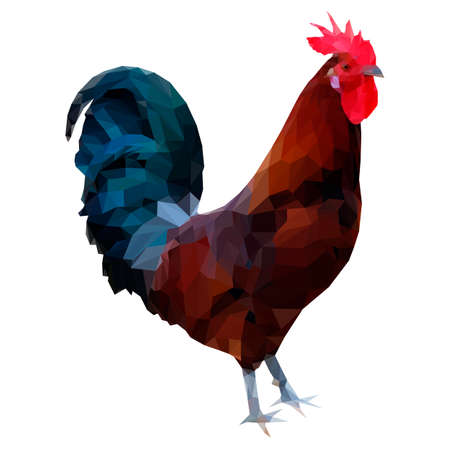 animal cock: illustrazione poligonale di un gallo ranuncolo siciliana. Silhouette di colorato gallo triangolo stile basso poligono. Bella marrone gallo rosso con testa e la coda blu verde isolato su sfondo bianco