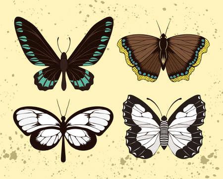 Hand drawn palawan birdwing, glasswing, columbine and mourning cloak butterflies